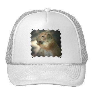 Prairie Dog  Baseball Hat