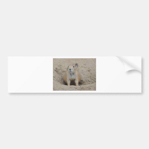 Prairie Dog Bumper Stickers