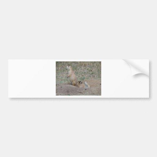 Prairie Dog Bumper Sticker