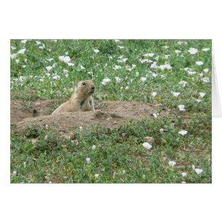 Prairie Dog Card