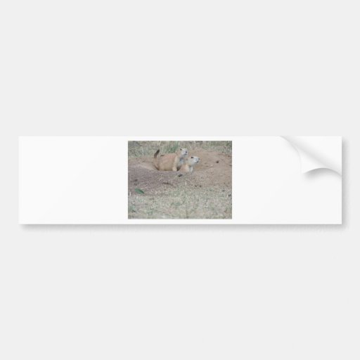 Prairie Dog Couple Bumper Stickers