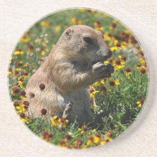 Prairie Dog Drink Coasters