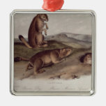 Prairie Dog from 'Quadrupeds of North America' Silver-Colored Square Decoration