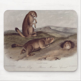 Prairie Dog from 'Quadrupeds of North America' Mouse Mat