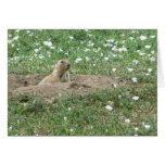 Prairie Dog Greeting Cards
