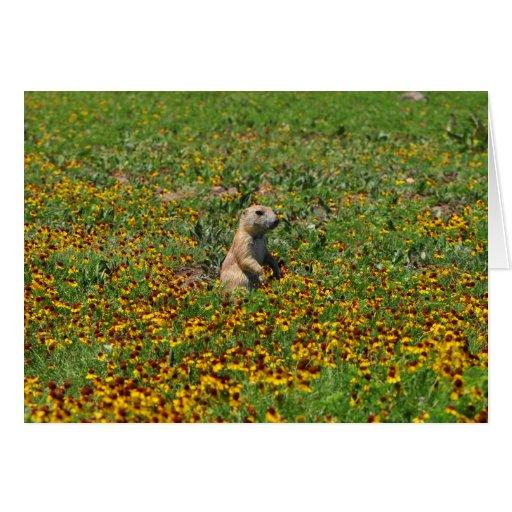 Prairie Dog in Flowers Card