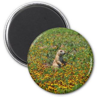 Prairie Dog in Flowers Refrigerator Magnets