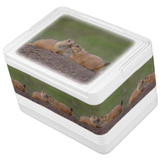 prairie dog kiss igloo cool box