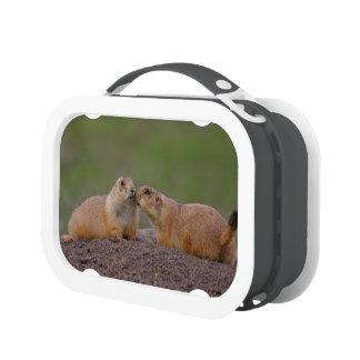 prairie dog kiss lunch boxes