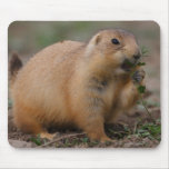 Prairie Dog Mousemats