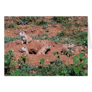 Prairie Dog pups Greeting Card