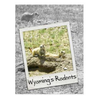 Prairie Dog Wyoming's Rodents - Wyoming WY USA Postcard