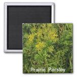 Prairie  Parsley Magnet