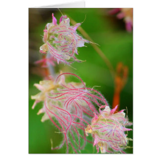 Prairie Smoke Card