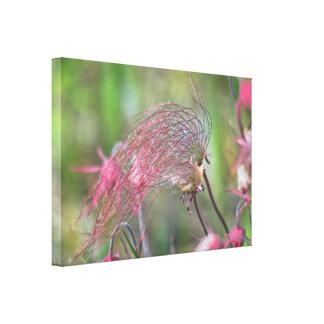 Prairie Smoke Flower Canvas Print