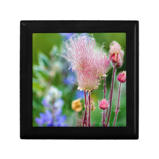 Prairie Smoke Wildflowers In Aspen Grove 2 Small Square Gift Box