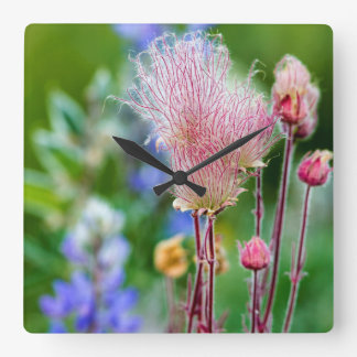 Prairie Smoke Wildflowers In Aspen Grove 2 Square Wall Clock
