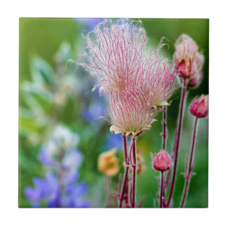 Prairie Smoke Wildflowers In Aspen Grove 2 Tile