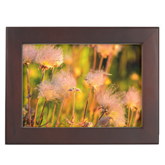 Prairie Smoke Wildflowers In Aspen Grove Keepsake Box