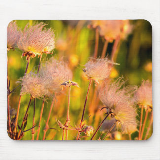 Prairie Smoke Wildflowers In Aspen Grove Mouse Mat