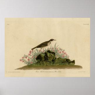 Prairie Titlark Print