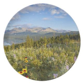 Prairie wildflowers and Lower Two Medicine Lake Plate