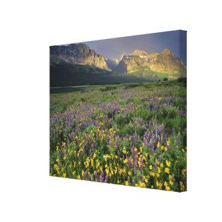 Prairie wildflowers fill meadow near Lake Canvas Print