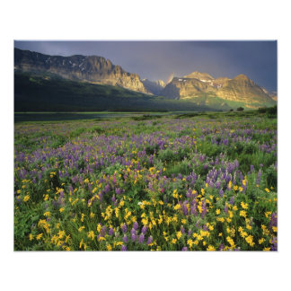 Prairie wildflowers fill meadow near Lake Photo Print