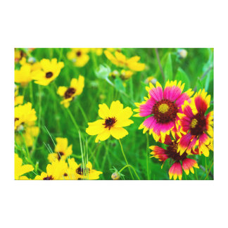Prairie wildflowers in Hill Country Gallery Wrapped Canvas