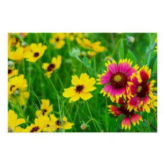 Prairie wildflowers in Hill Country Poster