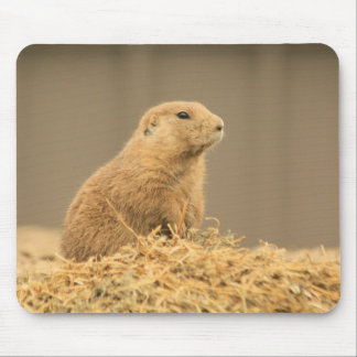 Prarie Dog Ain t I Cute Mouse Pads