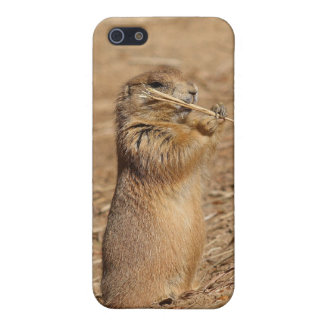 Prarie dog iPhone 5/5S covers