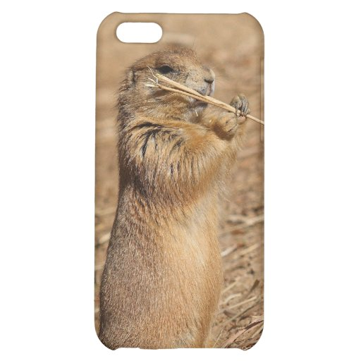 Prarie dog iPhone 5C covers