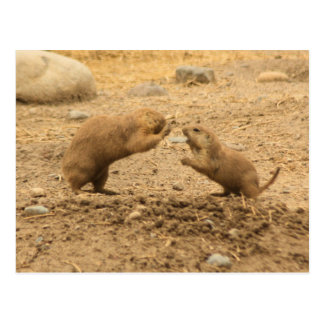 Prarie Dogs Give Me Some Skin Postcard