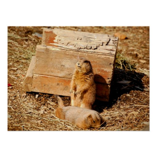 Prarie Dogs Poster
