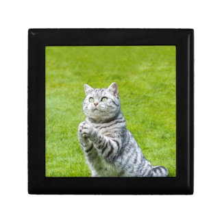 Praying cat on green grass small square gift box