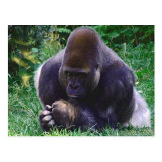 Praying Gorilla Post Card