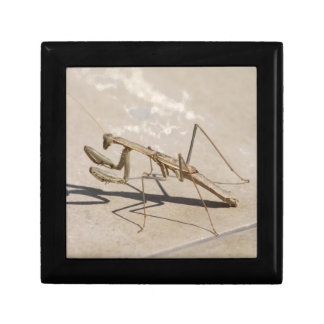 Praying Mantis and Shadow Small Square Gift Box