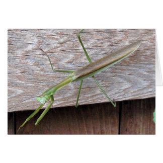 Praying Mantis Cards