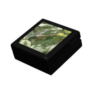 Praying Mantis Jewelry Box