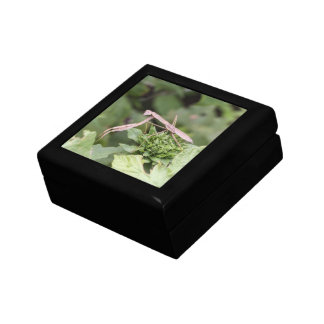 Praying Mantis Jewelry Boxes