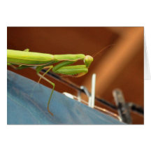 Praying Mantis Greeting Cards