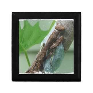 Praying Mantis Insect Small Square Gift Box