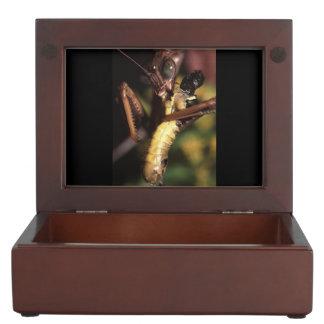 praying mantis memory box