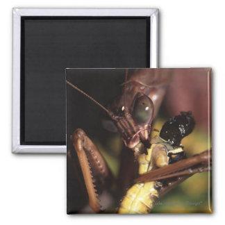 Praying Mantis Refrigerator Magnet