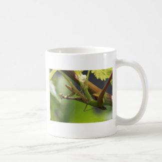 Praying Mantis on grape vine. Classic White Coffee Mug