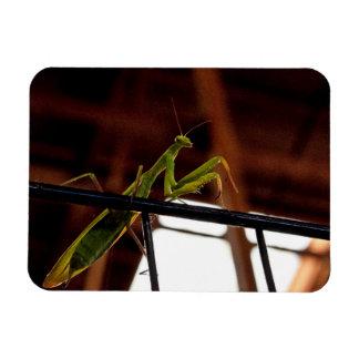 Praying Mantis Rectangular Photo Magnet