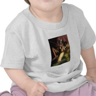 Praying Mantis Tee Shirts