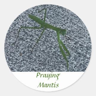 Praying Mantis Walking on Sidewalk Insect Stickers