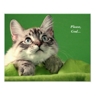 Praying Siamese Cat Print Photo Print